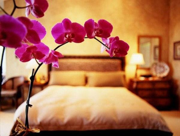 Модные комнатные растения как